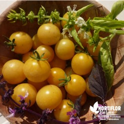 Tomate 'Cerise blanche' -...