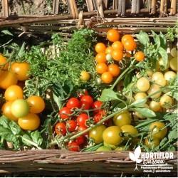 Kit 6 Tomates 'Cocktail' -...