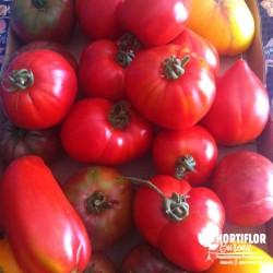 Kit 6 Tomates 'Must des...