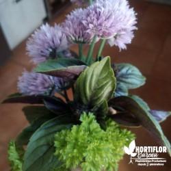 Kit 6 Plantes 'Herbes...