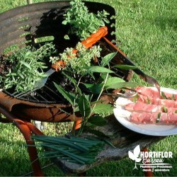 Kit 6 Plantes 'Extra Barbecue'